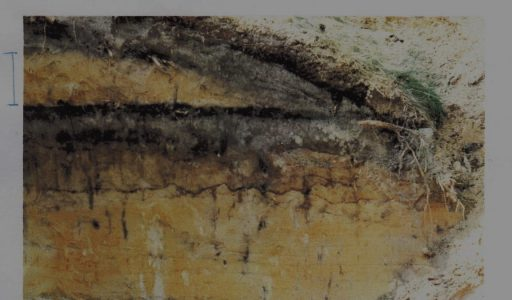 Moorsel, bezoek aan de wal in 1986